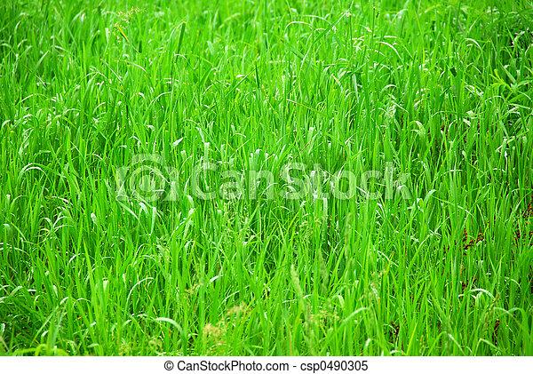 Hierba verde - csp0490305