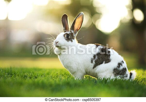 Conejo sobre hierba verde - csp6505397