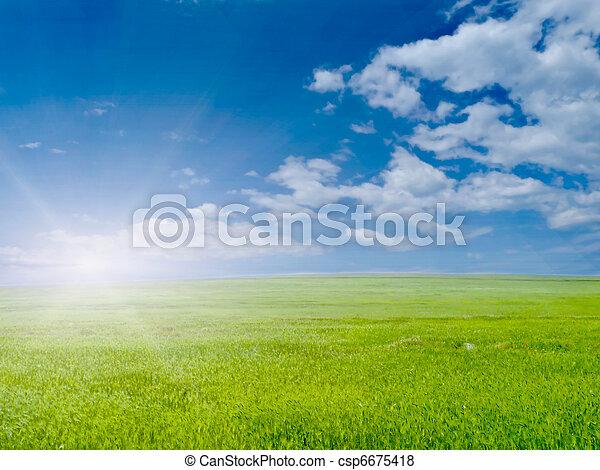 Hierba verde - csp6675418