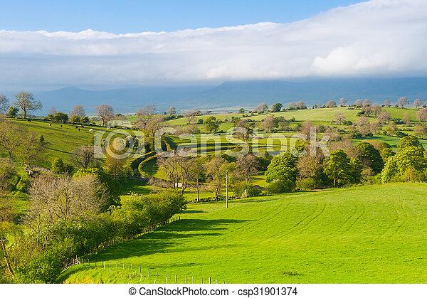 En el prado, la bragueta de Smardale, Gran Bretaña - csp31901374