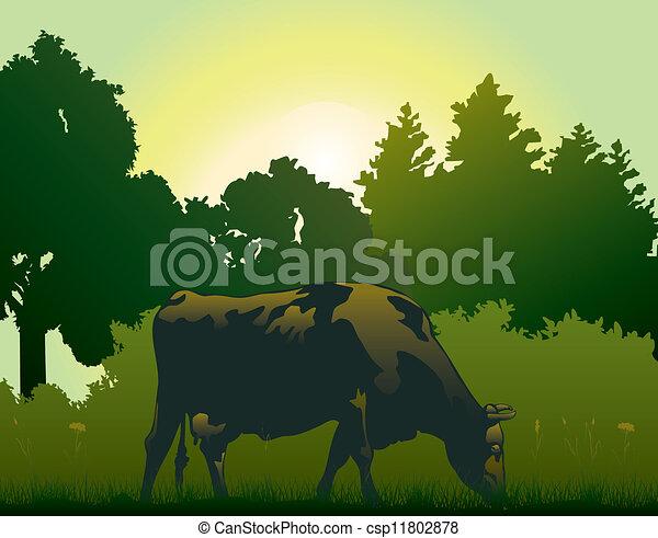 Vaca pastando por la mañana - csp11802878