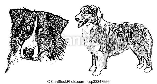 pastor, australiano, ilustração - csp33347556