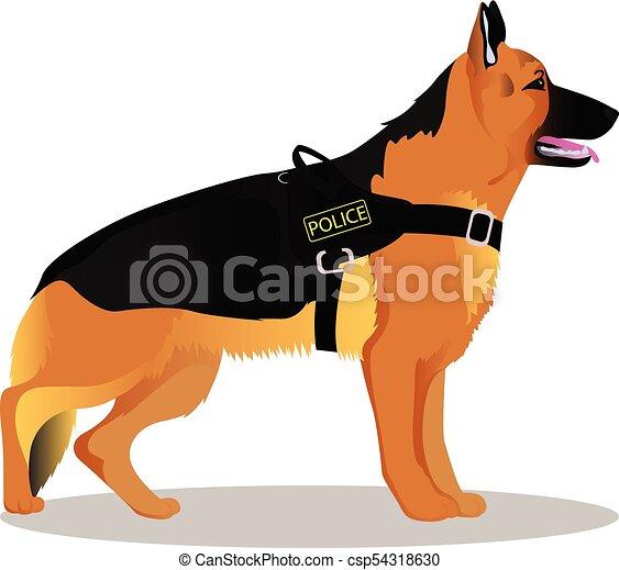 Pastore Tedesco Cane Poliziotto Pastore Polizia Tedesco Cane