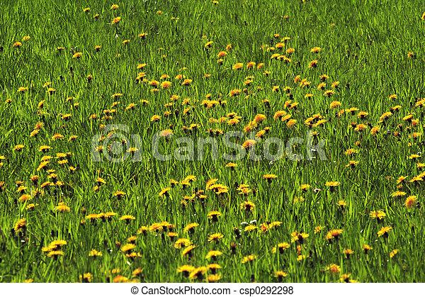 pastureland, fleurs, 01 - csp0292298