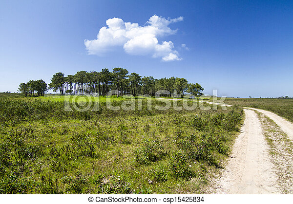 patch of trees with dirt road - csp15425834