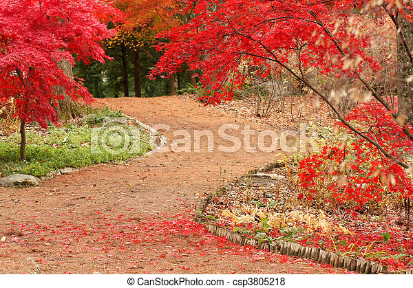 Path and Japanese Maples - csp3805218