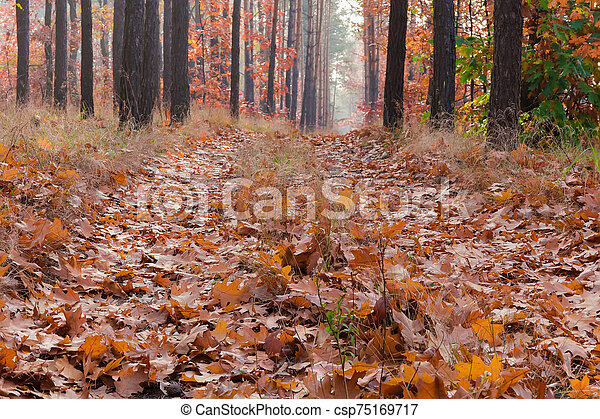 Path covered with fallen leaves in autumn forest close-up - csp75169717