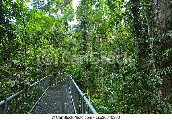 Path in a rain forest - csp36840360