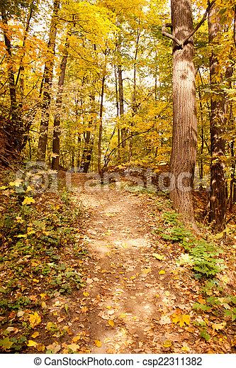 Path in autumn park - csp22311382