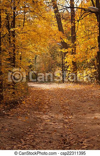 Path in autumn park - csp22311395