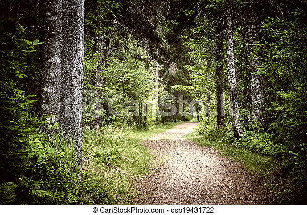 Path in dark moody forest - csp19431722