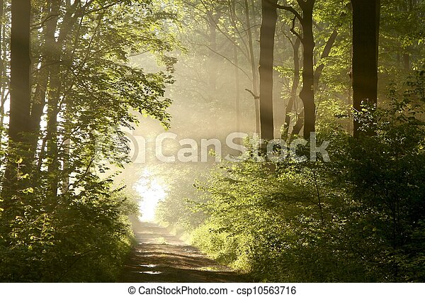 Path in spring woods at dawn - csp10563716