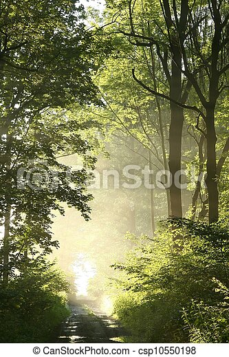 Path in spring woods at dawn - csp10550198