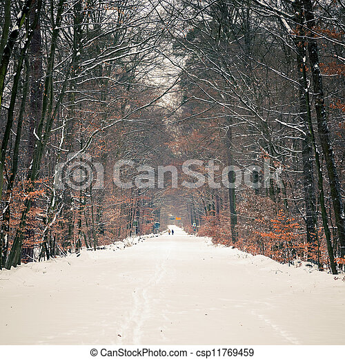 Path in winter forest - csp11769459