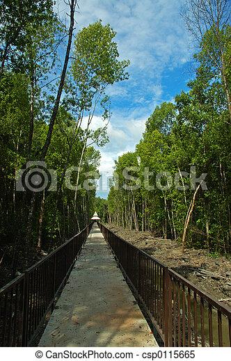 Path of nature - csp0115665