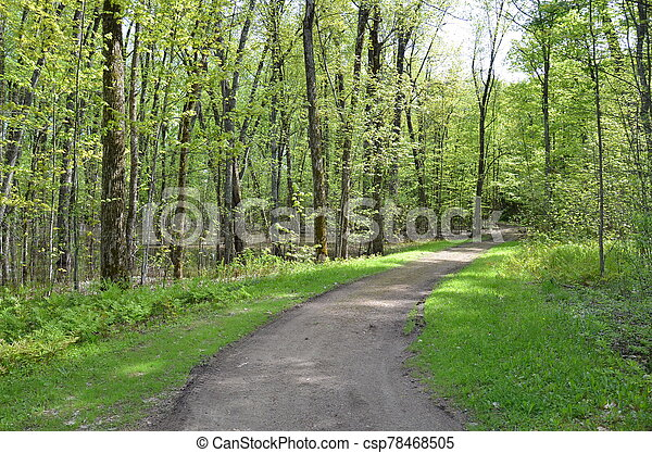 path or trail in the forest or woods with trees - csp78468505