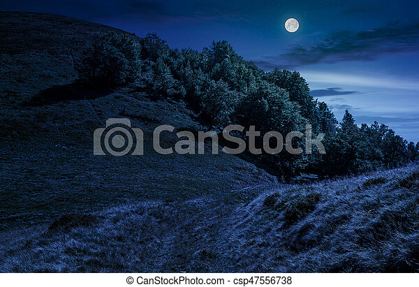 path through forest on hillside meadow at night - csp47556738