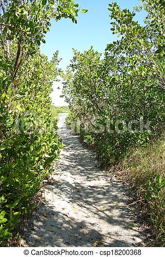 Path Through Woods Leading to Secret Beach - csp18200368