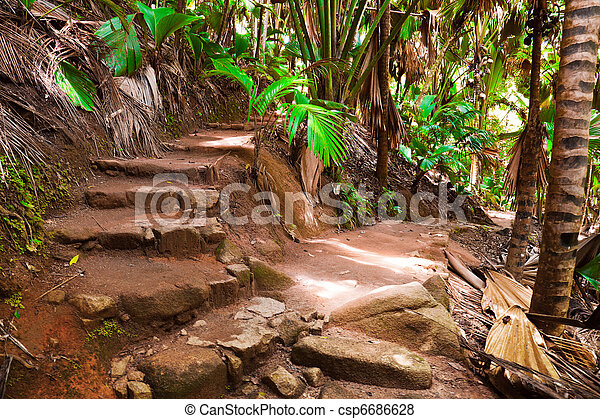 Pathway in jungle, Vallee de Mai, Seychelles - csp6686628