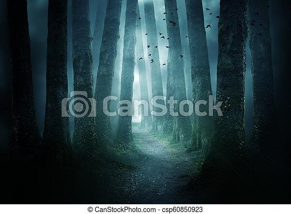 Pathway Through A Dark Forest - csp60850923