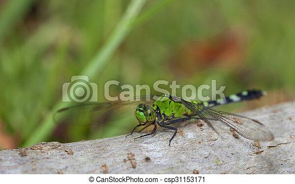 Patient dragonfly - csp31153171