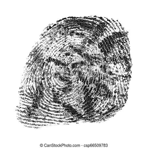 Patrón de huellas digitales negras aislado en el fondo blanco - csp66509783