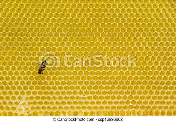 Patrón de miel con abeja - csp16996662