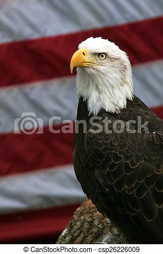 Patriotic Bald Eagle - csp26226009