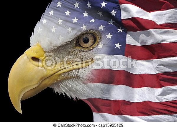 Patriotic eagle portrait - csp15925129