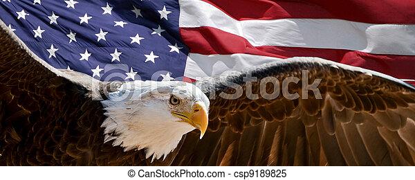 Patriotic Eagle - csp9189825