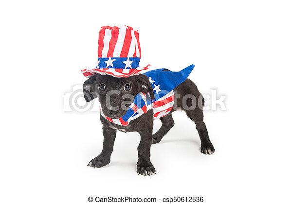 patriotique, rigolote, américain, chiot, chien - csp50612536