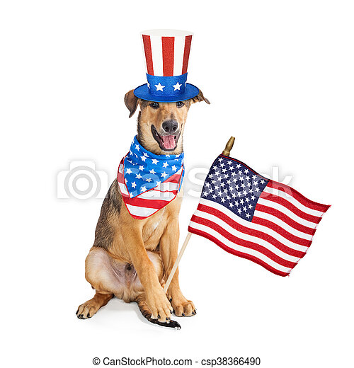 patriotique, rigolote, drapeau, américain, chien - csp38366490