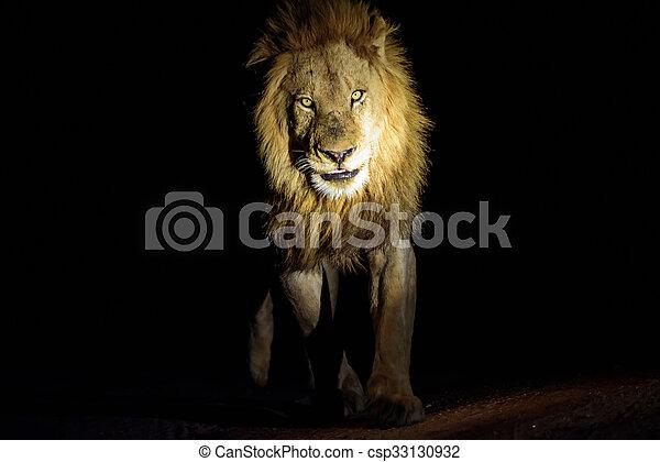 patrouille, mâle, nuit, lion - csp33130932