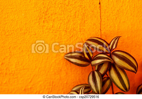 Pattern leaves on a orange wall - csp20729516