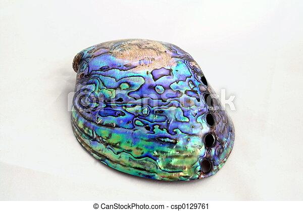 Paua Shell - csp0129761