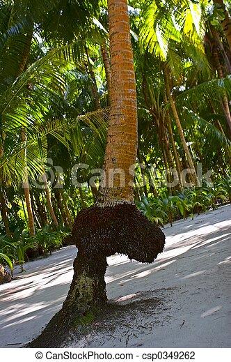palmier zizi