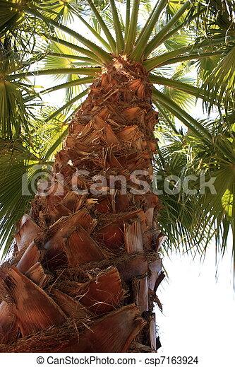 Palma en pavo - csp7163924