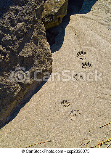 cee49fec1 Paw prints in the sand. Paw prints in the sand - probably raccoon.