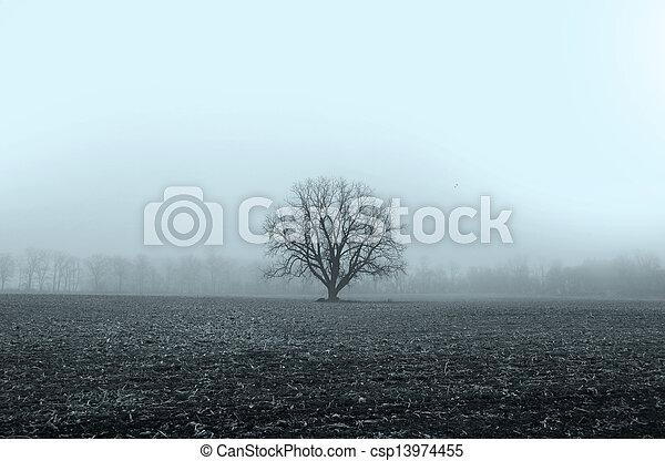 paysage brumeux - csp13974455