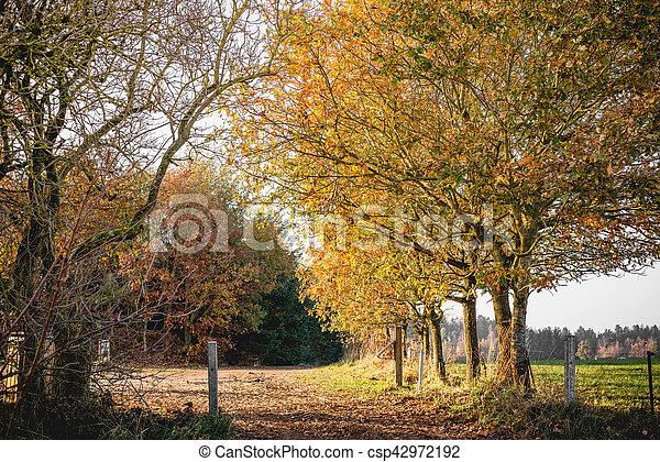 foto de Paysage, campagne, paysage automne. Paysage, doré, campagne ...
