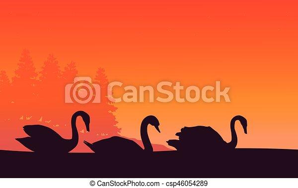 paysage, coucher soleil, cygne, silhouette - csp46054289