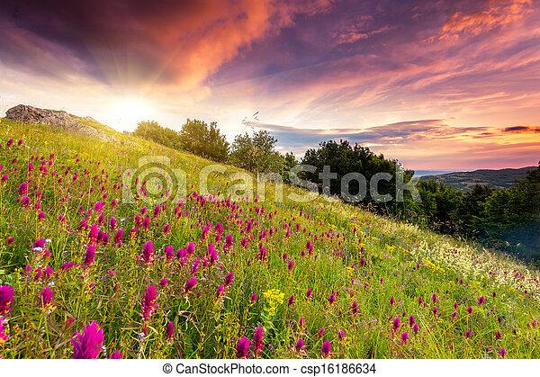 paysage montagne - csp16186634