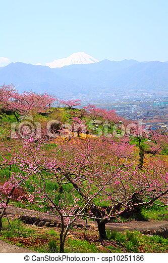 Peach tree and Mt. Fuji - csp10251186