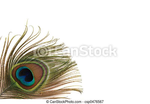 Peacock Border - csp0476567
