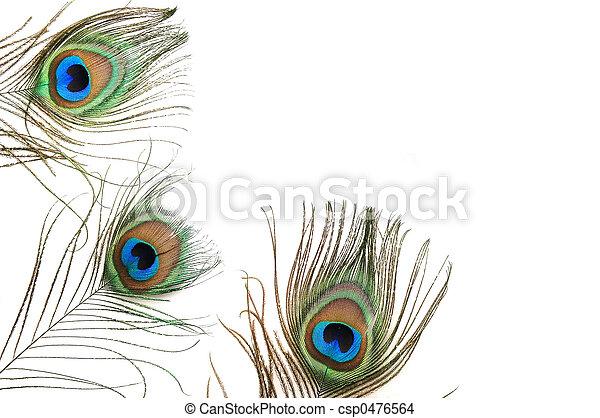 Peacock Border - csp0476564