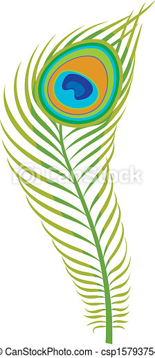 peacock feather clipart vector search illustration drawings and rh canstockphoto com peacock feather clip art vector peacock feather clip art images