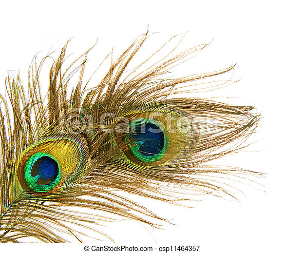 Peacock Feathers over white - csp11464357