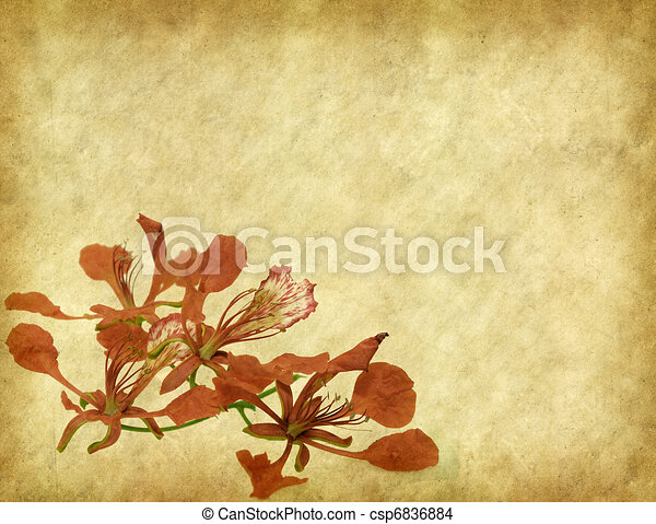 Peacock flowers on tree with Old antique vintage paper background   - csp6836884
