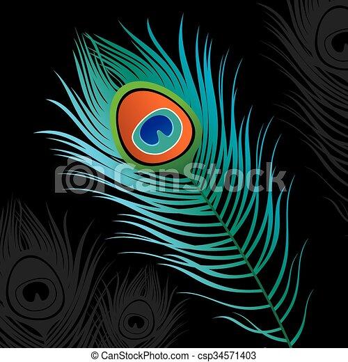 peacock veer, vector, vrijstaand - csp34571403