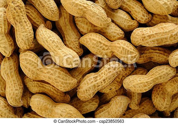 Peanuts on white background - csp23850563
